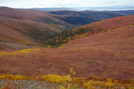 Arctic tundra - Top of the World Highway, Yukon Territory, Canada