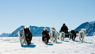 sled dogs in the Arctic